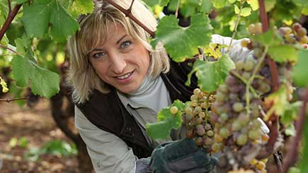 Vineyard Tour, Lunch And Wine Tasting For Two In Suffolk