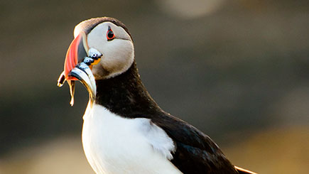 One Day Puffin Tour For Two